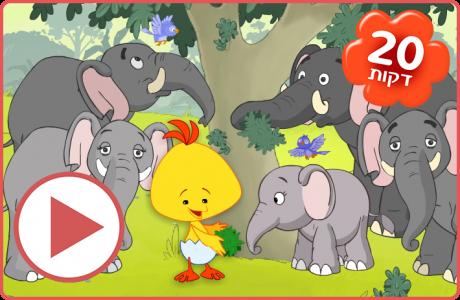 לולי אוהב פילים